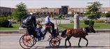 Traditional transportation around the main square in Isfahan